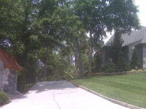 Driveway_lighting_created_by_downlighting_or_moon_lighting_trees_gracing_driveway(2)