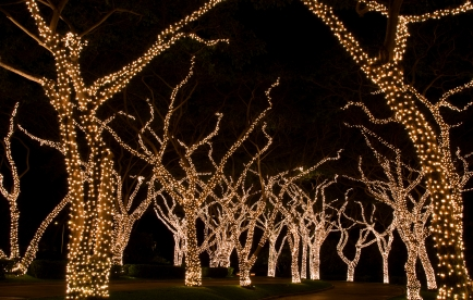 Tree branches and trunks wrapped in festive lights.