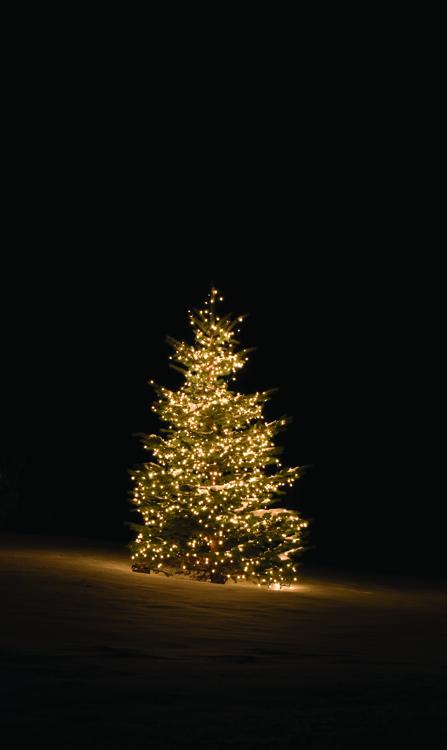 outdoor tree lighting by Outdoor Lighting Perspectives