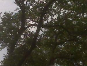 Tree lighting Outdoor Lighting Perspectives of Nashville