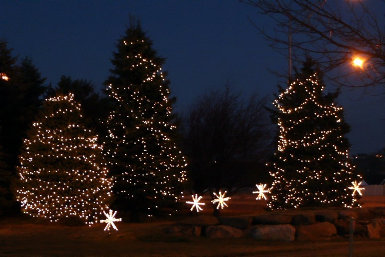 Outdoor Christmas Lights On Trees