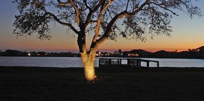 Nashville tree lighting