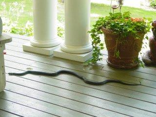 Snake on deck