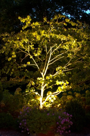 Tree and landscape lighting on Royal Oaks in Belle Meade by Outdoor Lighting Perspectives of Nashville