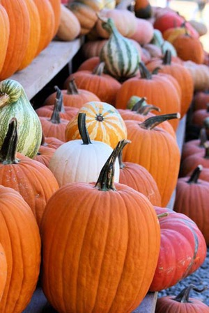 Pumpkin patch at RiverView Mounds