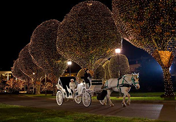 Hillsboro, West End Christmas lighting Carriage Tours