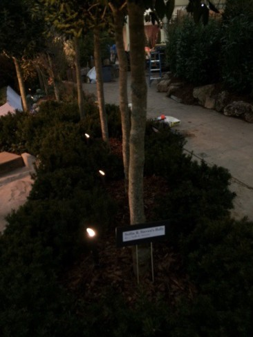 Paul Lively garden