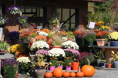 Nashville autumn landscape planning