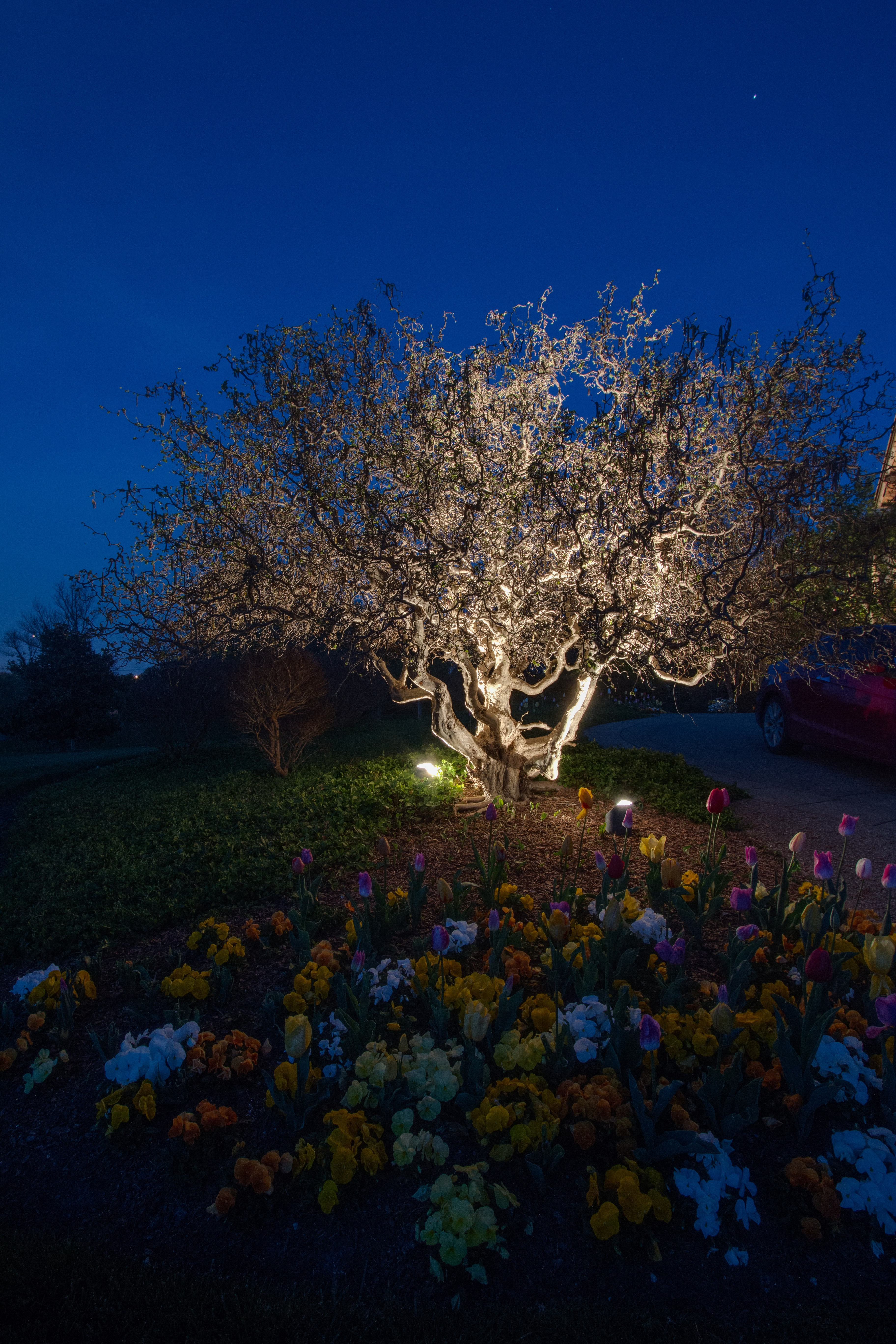 Permanent festival lighting for outdoor areas nashville outdoor nashville tn moonlighting used in trees aloadofball Choice Image