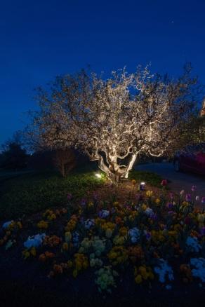 Nashville TN moonlighting used in trees