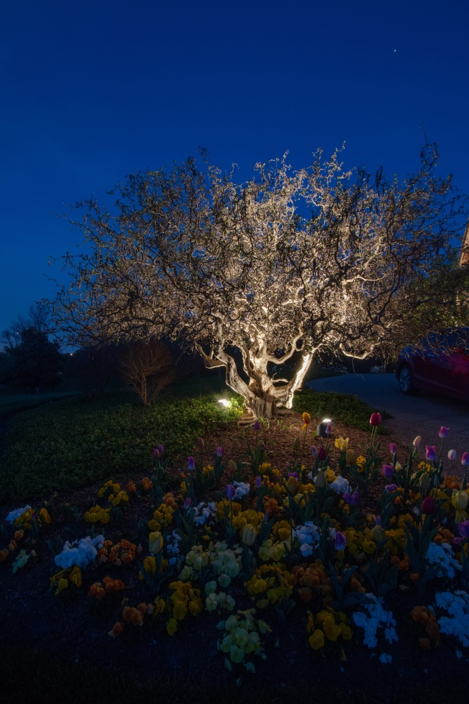 Outdoor Lighting Perspectives: Nashville TN Moonlighting Used In Trees